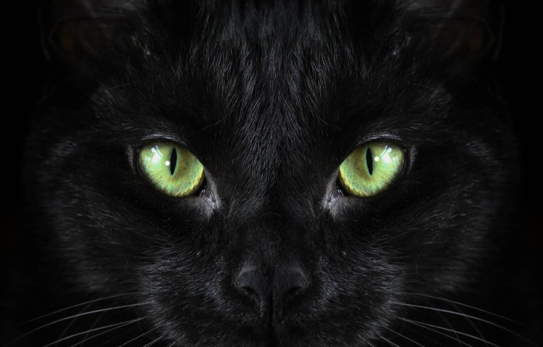 Фото обои black, cat, Macro, green eyed