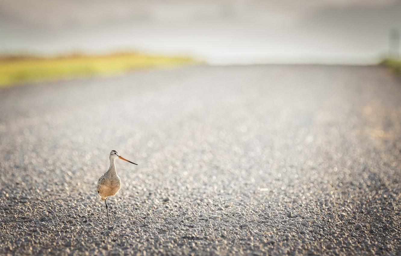 Фото обои Alberta, Bird, gravel road