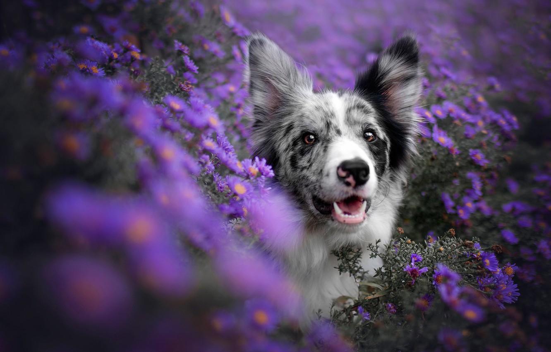фиолетовые животные фото его
