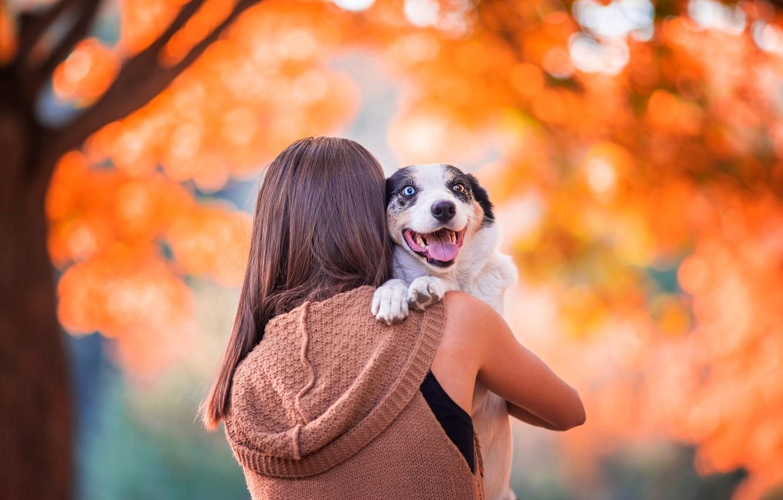 Фото обои девушка, собака, Осень, боке