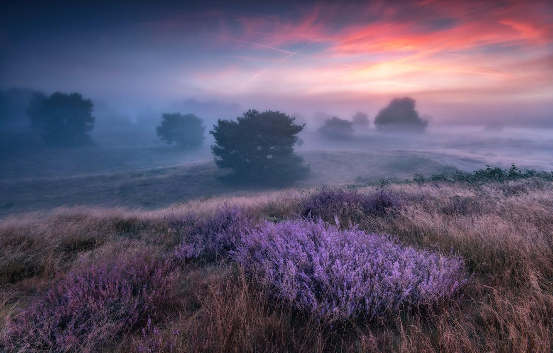 Фото обои деревья, природа, туман, вечер, утро