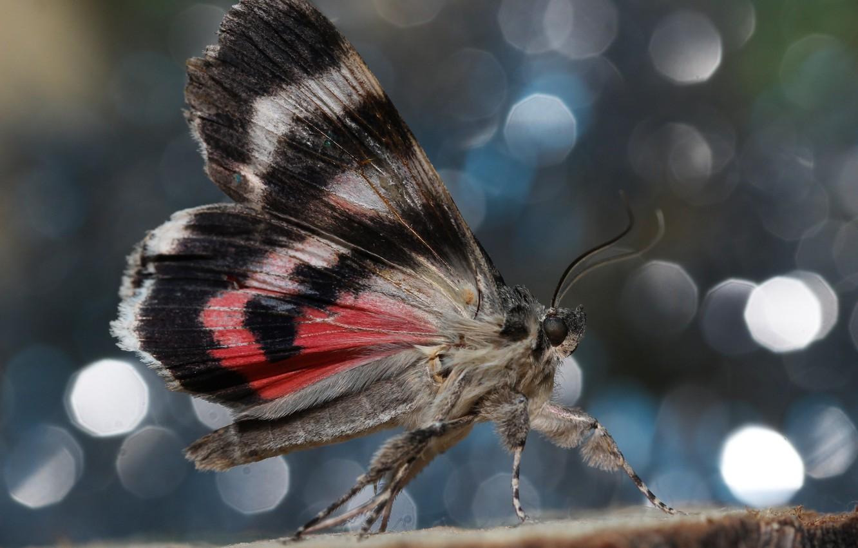 Фото обои фон, бабочка, крылья