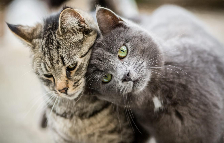 того, картинки кошек парами половинку рыбы продолжаем