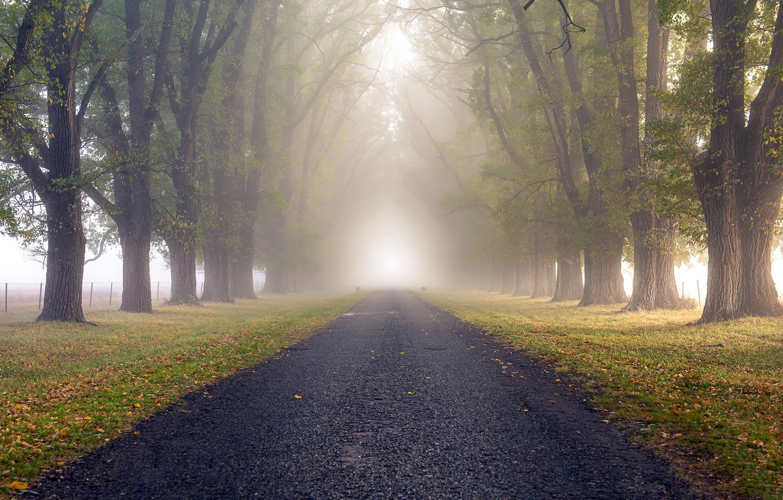 Фото обои дорога, природа, туман