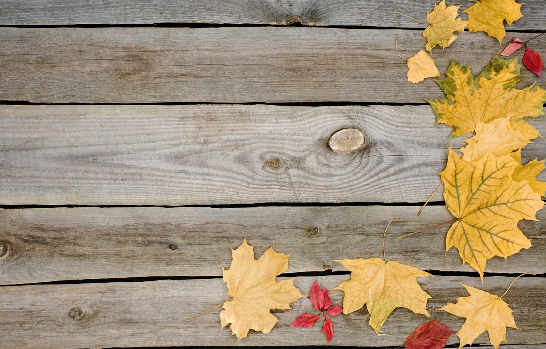 Фото обои осень, листья, фон, дерево, доски, wood, background, autumn, leaves, осенние, maple