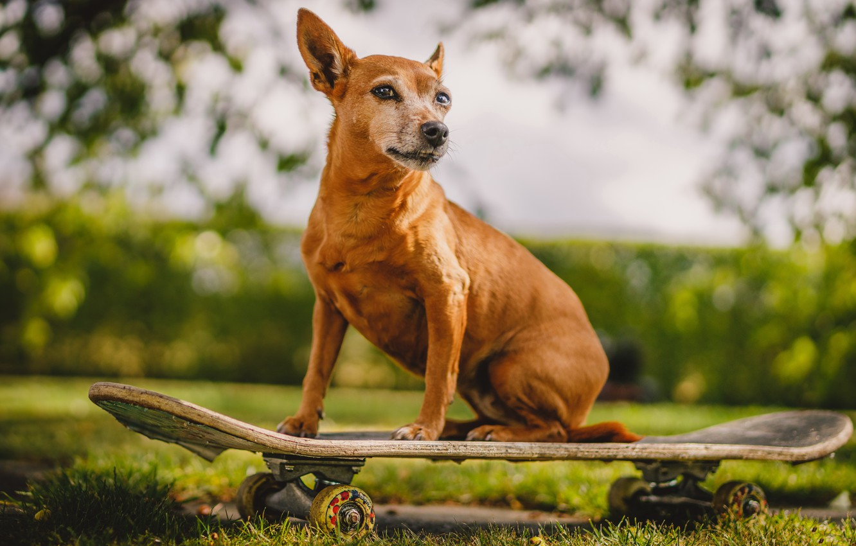 Фото обои друг, собака, скейборд