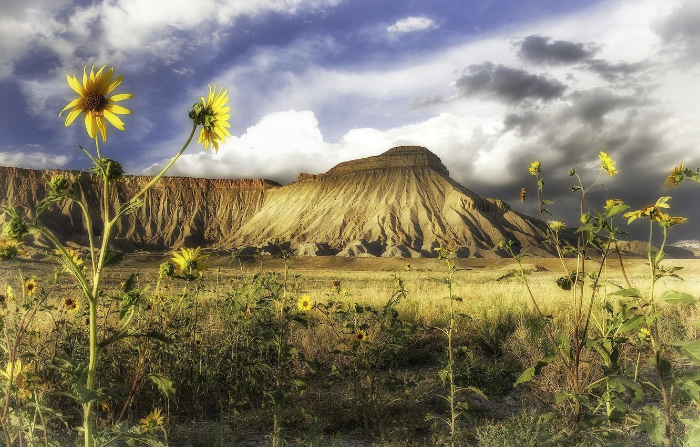 Фото обои подсолнухи, пейзаж, цветы, природа, гора, красота