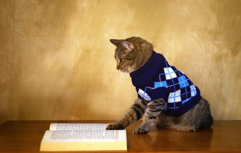 Фото обои осень, кот, тепло, стол, серый, стена, книга, кофта, полосатый, свитер, 1 сентября, чтение, ученый, знания, ...