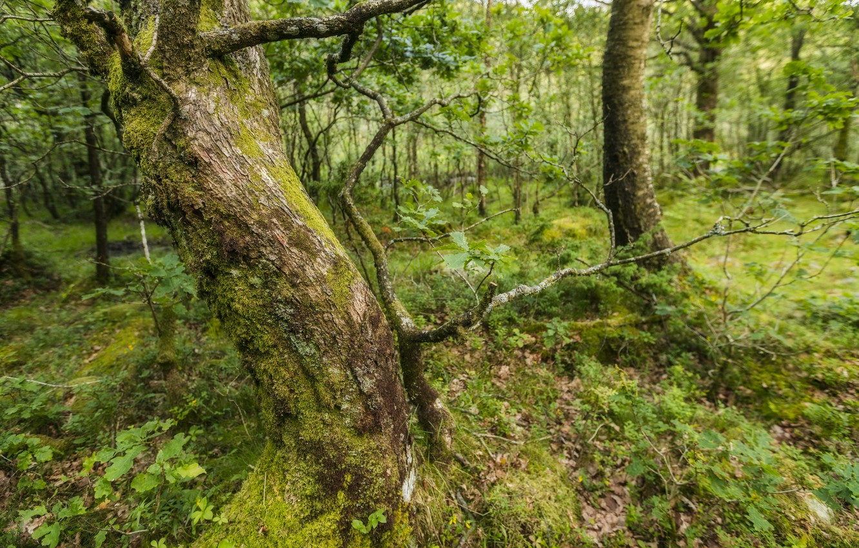 Фото обои лес, лето, природа, дерево
