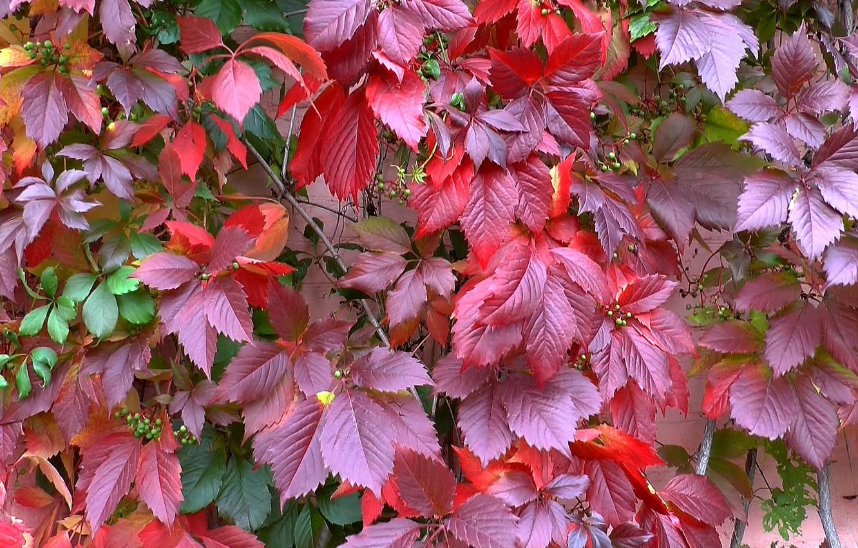 Фото обои осень, красота, Листья