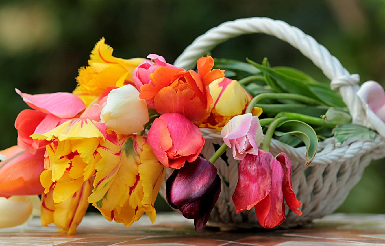 Фото обои цветы, корзина, весна, тюльпаны, ваза