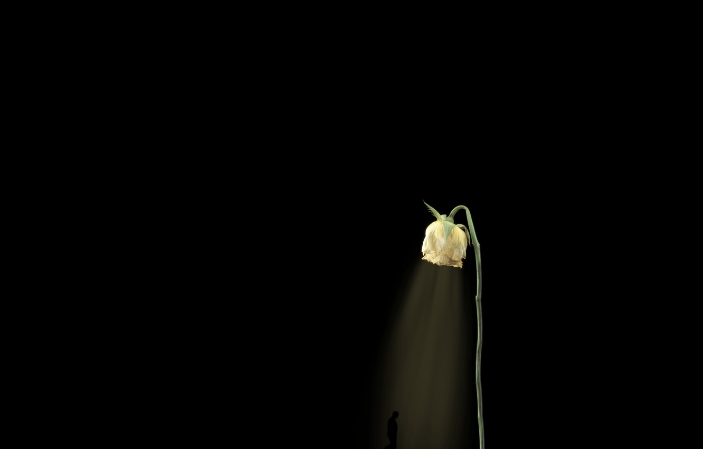 Фото обои свет, роза, человек