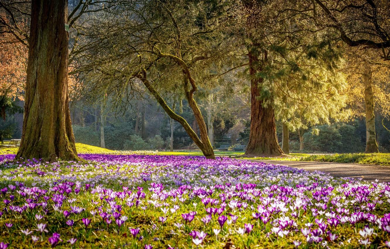 Фото обои цветы, парк, весна