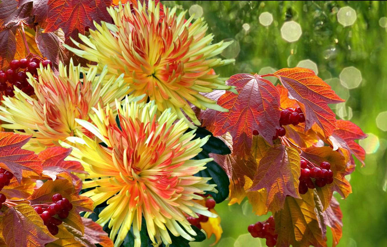 Фото обои осень, листья, капли, дождь, букет, Хризантемы