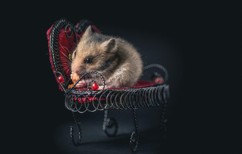 Фото обои кресло, мышка, грызун