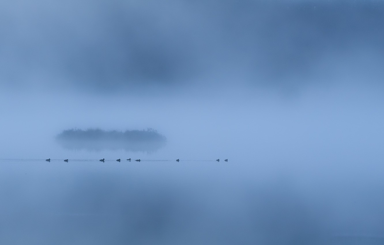 Фото обои туман, озеро, утки