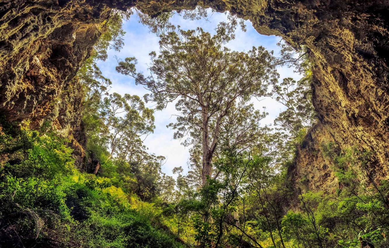 Фото обои пейзаж, дерево, пещера