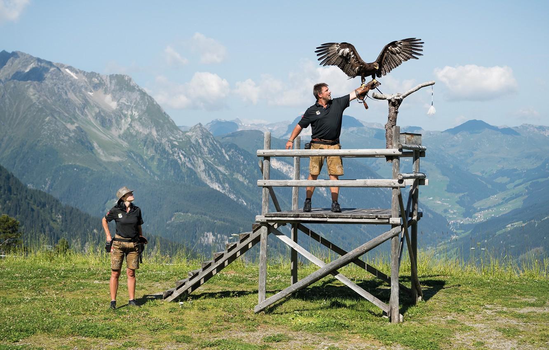 Фото обои woman, beautiful, man, eagle, Falconry