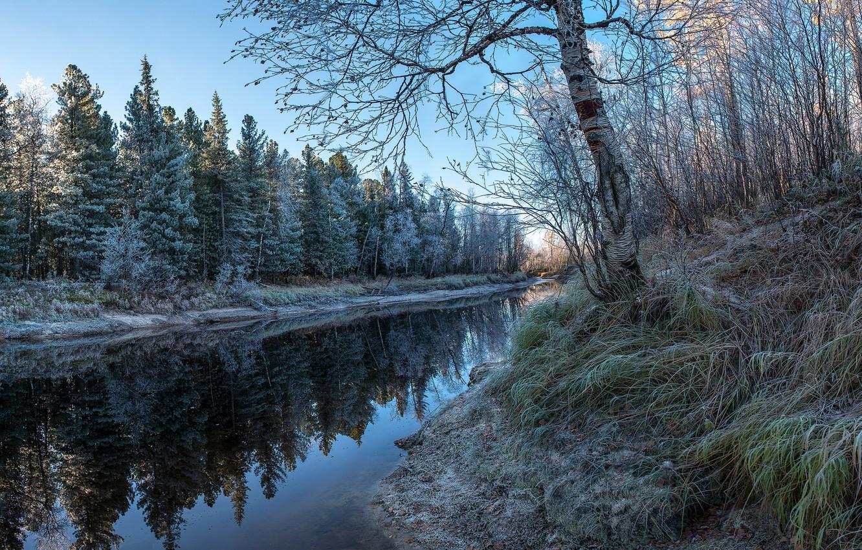 Фото обои зима, иней, осень, лес, трава, ветки, озеро, пруд, отражение, дерево, берег, ели, береза, водоем, изморозь, …