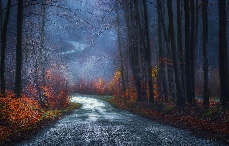 Фото обои дорога, листья, Деревья, Zan Foar