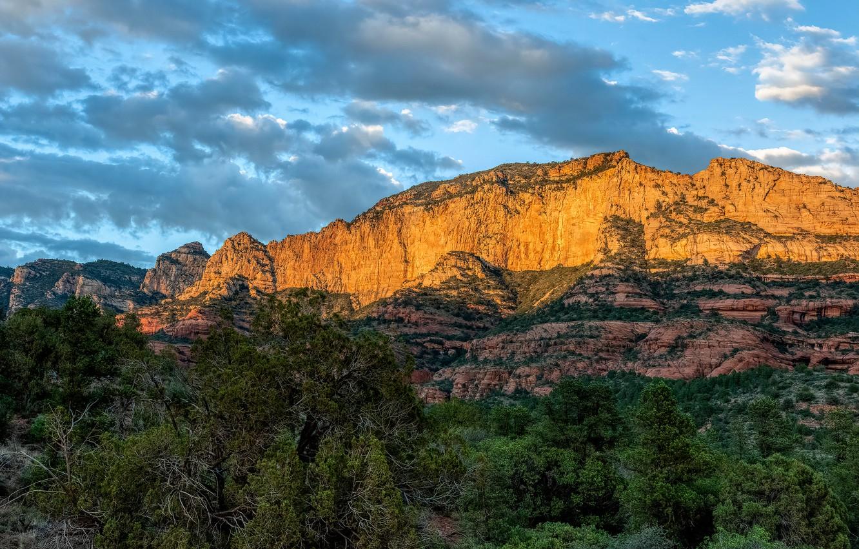 Фото обои лес, небо, солнце, облака, деревья, горы, камни, скалы, каньон, United States, Arizona, Sedona
