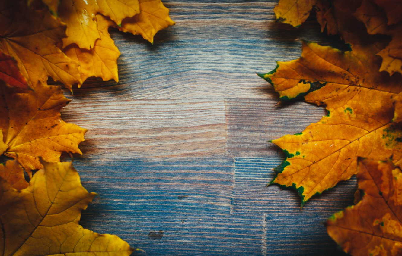 Фото обои осень, листья, фон, colorful, клен, yellow, wood, autumn, leaves, maple