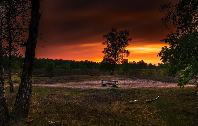 Фото обои закат, берёза, скамья
