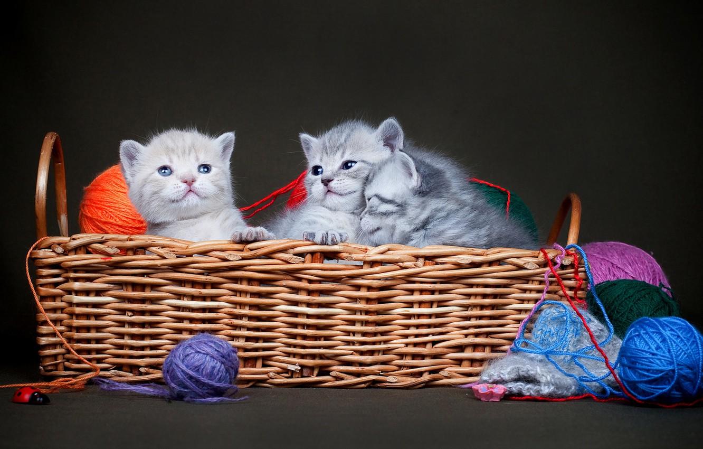Картинки кошка с котенком в лукошке, надписями блондинка