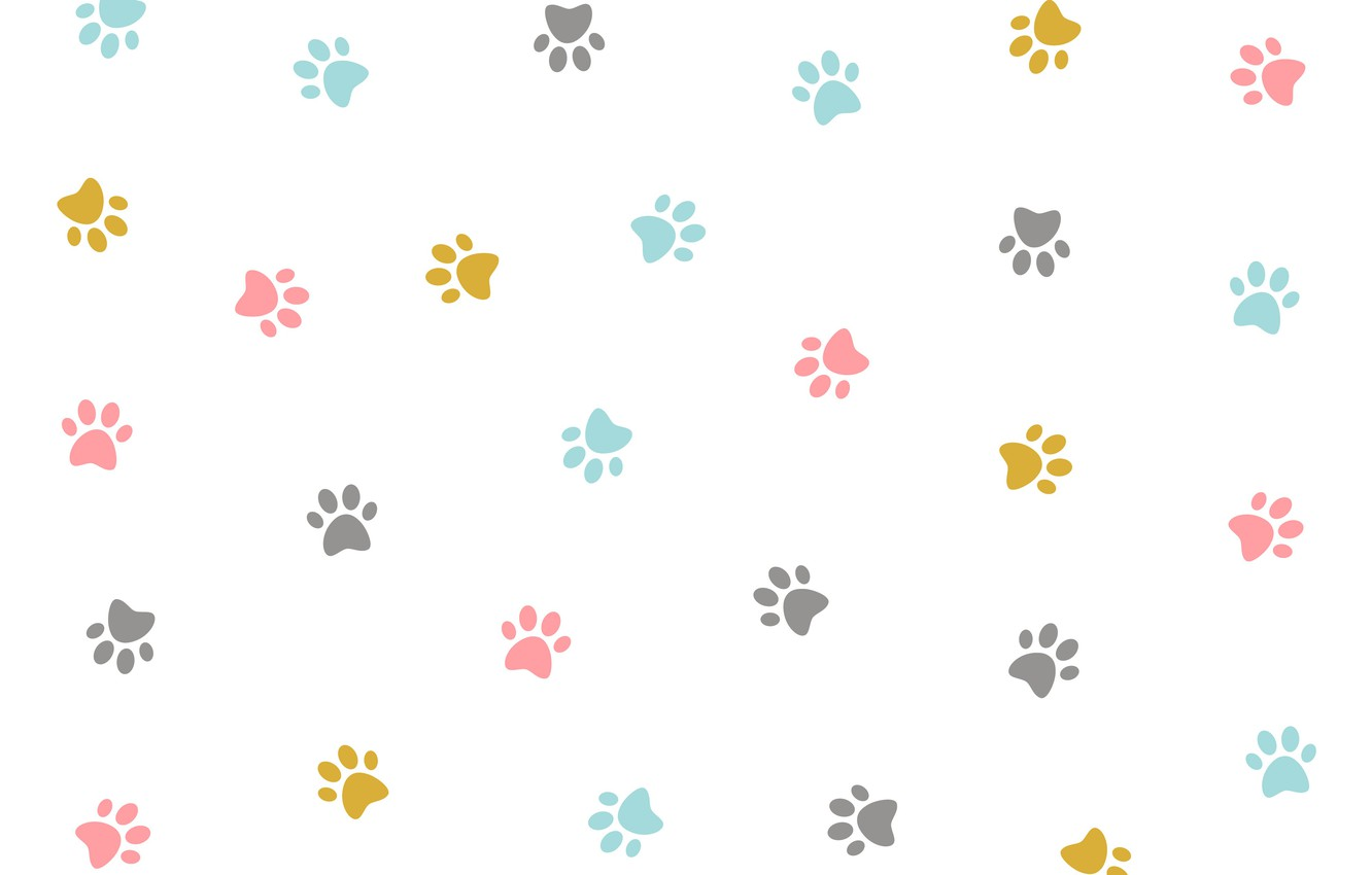 Фото обои текстура, colorful, белый фон, design, kitten, pattern