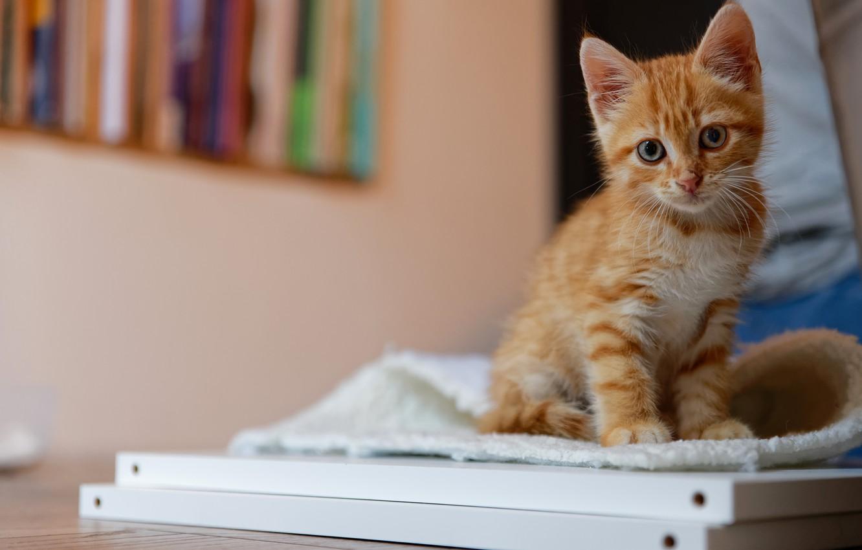 Картинки котята с рисовать внимание
