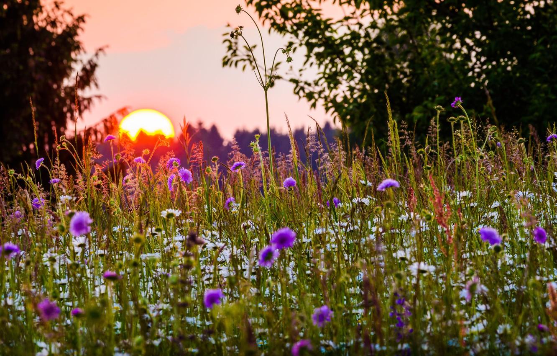Фото обои лето, трава, солнце, деревья, закат, цветы, природа, Бавария