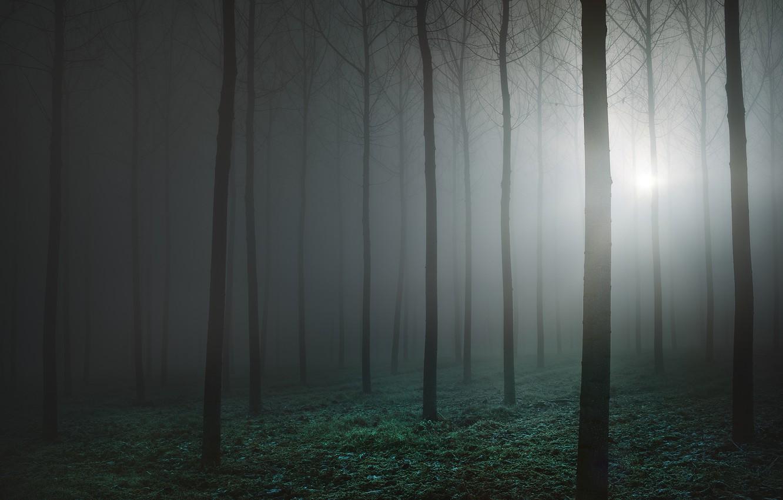 Фото обои лес, туман, forest, fog, Luca Rebustini