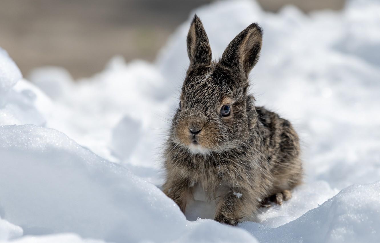 красивые картинки заяц на снегу объяснение тому