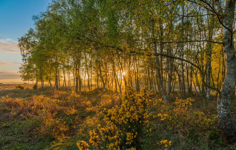 Фото обои поле, осень, лес, небо, трава, солнце, облака, деревья, цветы, туман, парк, рассвет, Англия, утро, кусты, …