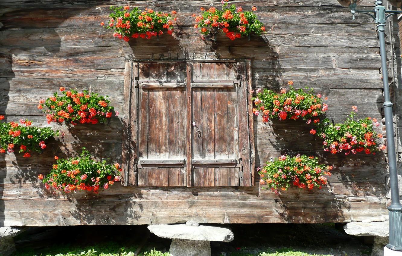 Фото обои цветы, интерьер, декор