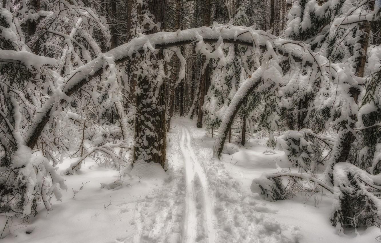 Фото обои зима, лес, снег, деревья, пейзаж, ветки, природа, лыжня