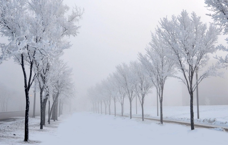 Фото обои зима, иней, дорога, снег, деревья, метель