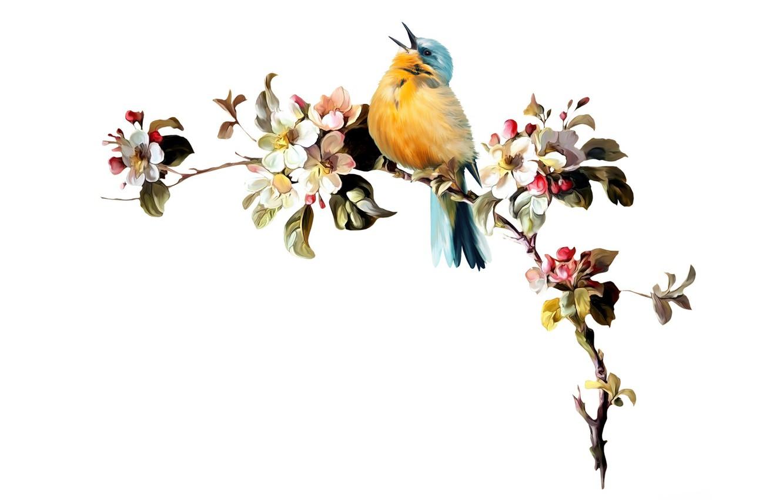 поделитесь весенние птицы картинки в векторе довёл