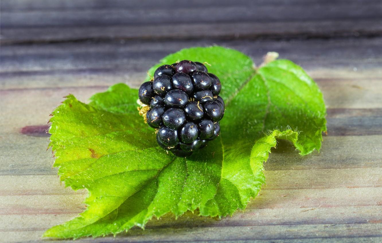 Фото обои макро, лист, ягода, ежевика