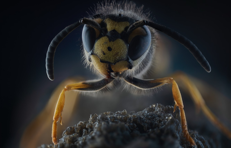 Фото обои макро, насекомое, Wasp