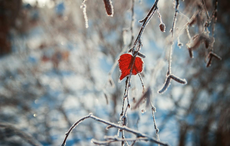 Фото обои зима, сердце, листок