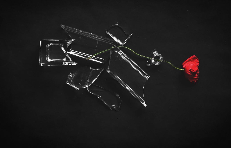 Фото обои цветок, осколки, мак, банка