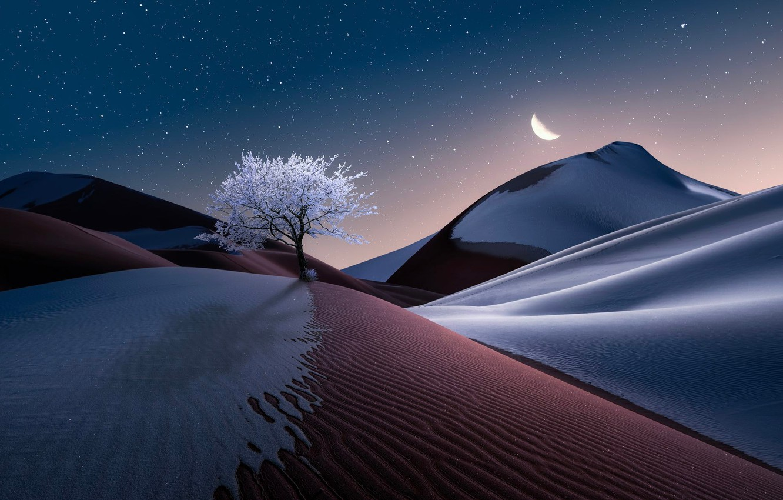 Фото обои небо, пейзаж, природа, дерево, луна, пустыня, графика, звёзды, пески, digital art