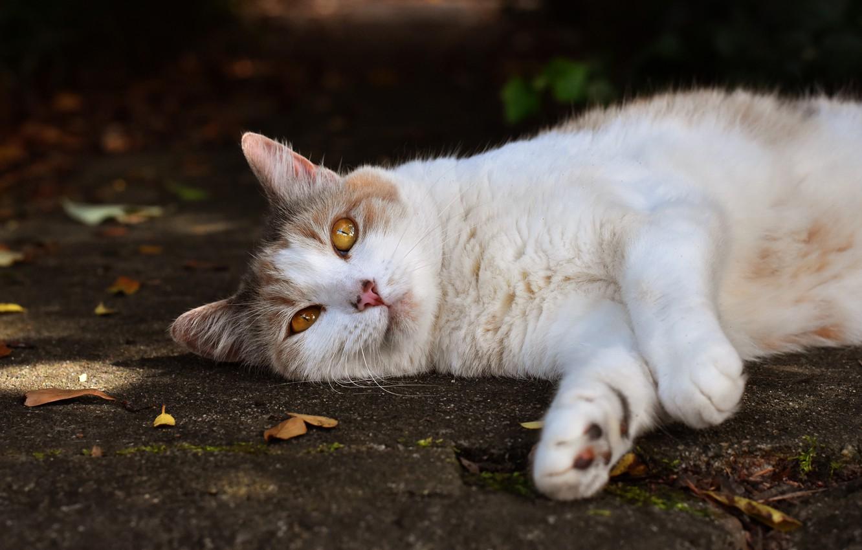Обои осень, котёнок, желтые глаза, рыжий. Кошки foto 7
