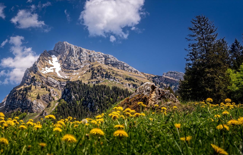 Фото обои лето, горы, Швейцария, одуванчики, Toggenburg, Altmann