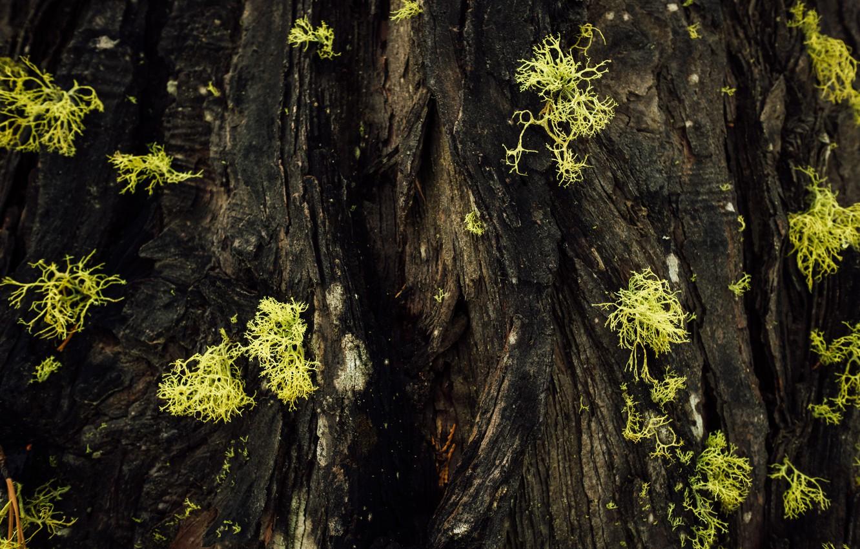 Фото обои макро, мох, кора дерева