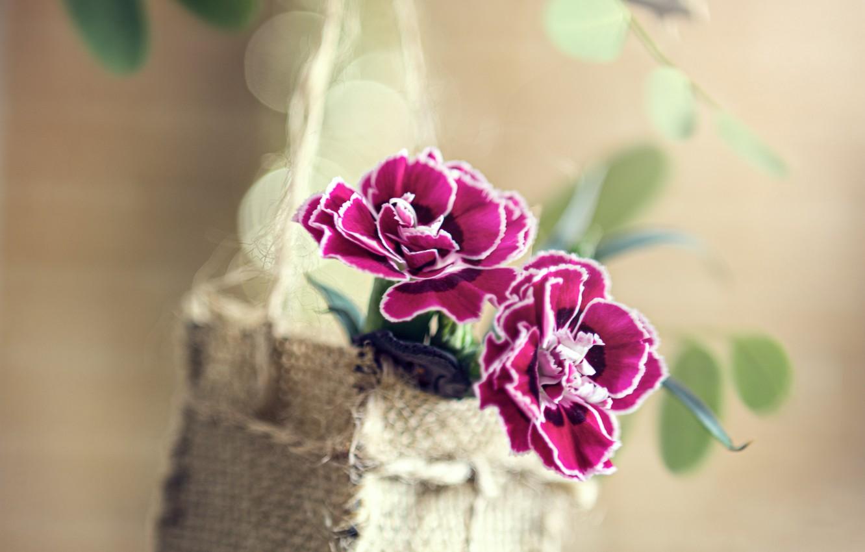 Фото обои листья, цветы, ветка, корзинка, боке, гвоздики