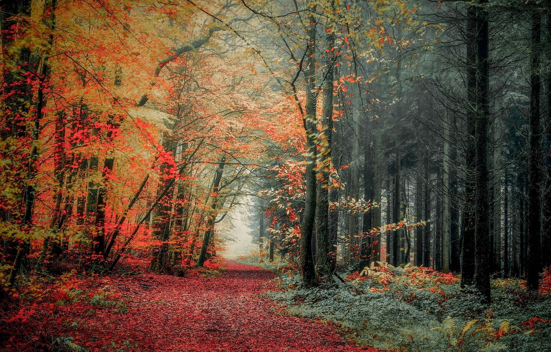 Фото обои осень, лес, фото, тропа