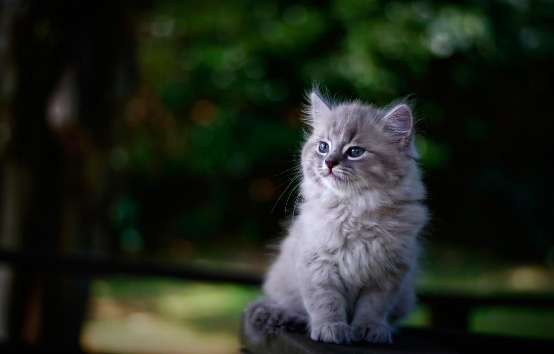 Фото обои фон, портрет, размытость, малыш, котёнок
