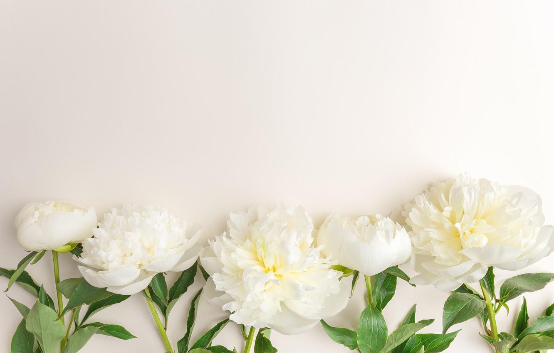 Картинки обои белые с цветком